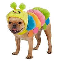 Dog Halloween Costumes  Fairfax, 22030