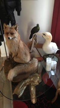 Brown Fox Taxidermy Stavanger, 4014