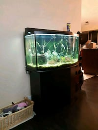 25 gal fish tank with 11 fish  West Kelowna, V1Z 3X9