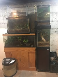 Four black metal framed fish tanks with one brown framed fish tank