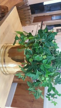 green leaf plant with brass pot Shelby, 28150