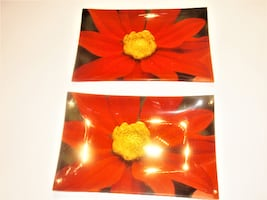 NEGOTIABLE -TWO GLASS TRAYS, FLOWER PHOTO, PERFECT, NO CHIPS