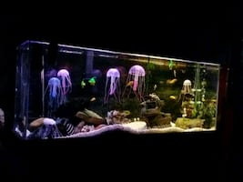 Complete 55G Aquarium with many many Accessories
