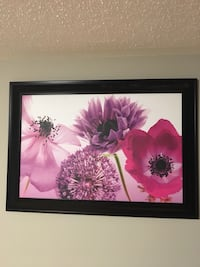 Large flower pictures  Bradford West Gwillimbury, L3Z 0G2