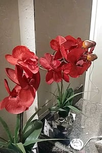 faux red moth orchids Santa Ana, 92705
