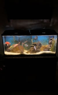 Fish tank MUST TAKE FISH AND ALL ACCESSORIES