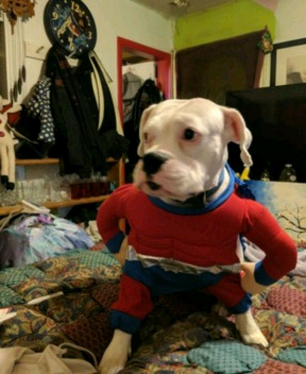 Used Super dog outfit for sale in Tulsa - letgo