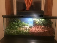Glass Tank (For small reptiles) Chicago