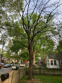 Gwinn's Tree service Washington