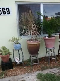 Plants for sale Lake Worth, 33461