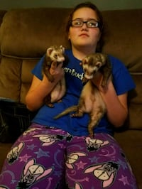 2 ferrets come with cage  Flatwoods, 41139