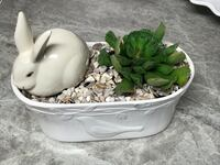 Cutest Ever Rabbit with Succulent Plant in a beautiful Ceramic Container. Perfect for Spring!!! Jefferson, 30549