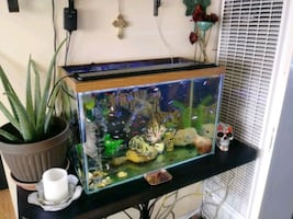 Fish tanks for sale w/accessories