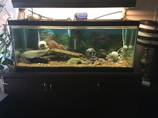 100 gallon fish tank