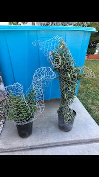 Topiary $20 each