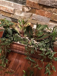 Healthy air purifying house plants, O2 for you