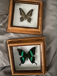 Real butterflies in Solid Oak Frame Mississauga, L4X 1R8