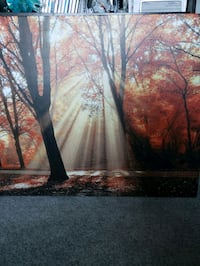 Autumn Forest 3x2.5' Lake Forest, 92630