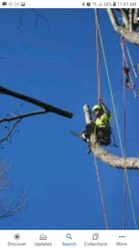 Quick and easy tree service
