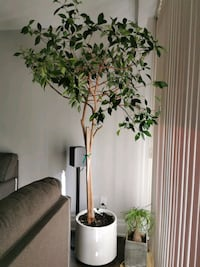 Indoor Plant for sale Toronto, M9L 2J1