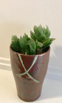 green leafed plant with brown pot 560 km