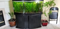 72 gallon curved aquarium for sale Vaughan