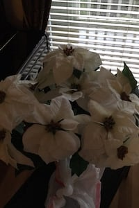 Poinsettia white big flowers in a pot Vancouver, V5S 2H7