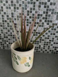 Tropical plant with decorative ceramic pot Hampstead, H3X 1S2