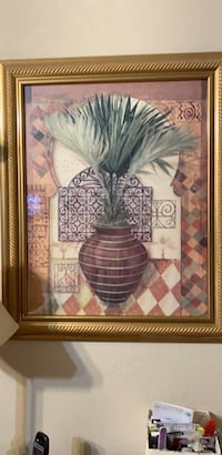 Palm in pot Norman, 73071