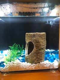 Beta Fish Tank and Accessories  London, N6G 0A3