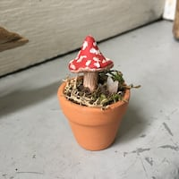 Mini mushroom pot decoration Kelowna, V1Y 5Y3