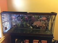 55 Gallon Aquarium Arlington, 22204