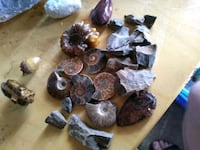 Assorted ammonite shell worm arrowhead wood Tysons, 22102