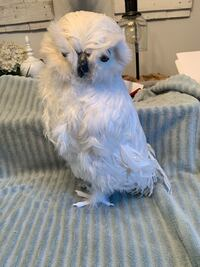 Artificial owl snow owl Virginia Beach, 23453