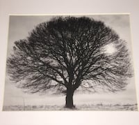 14x12 Black Wooden Frame Matted to 8 x 10 - TREE SILHOUETTE Jersey City, 07304
