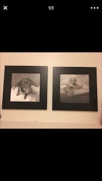 Two dachshund photo 10$for 2