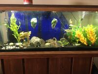 55g fish tank with stand