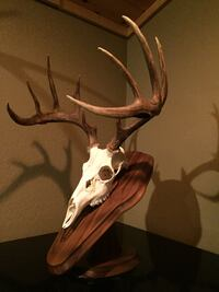 Southern draw Taxidermy European mounts with no plaque 80.00  Dahlonega, 30533