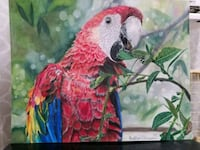 realistic macaw drawing Montgomery