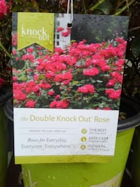 2gallon double knock out rose Hyattsville, 20785