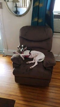 Recliner Brand new! paid over 300.00 puppy not included! Baltimore, 21211