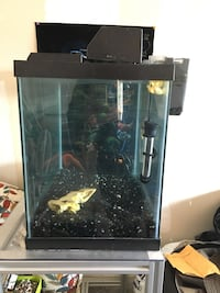 Fish tank with stand and all accessories  577 km