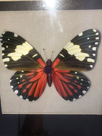 3 Dimensional Butterfly Photo Box New Gainesville, 20155