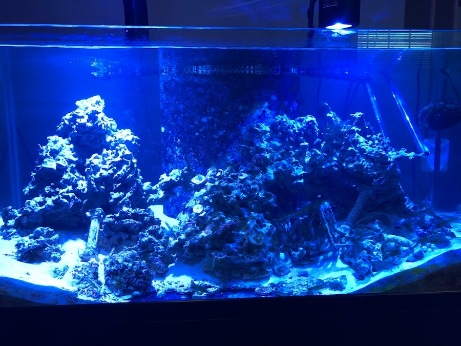 Used live rock for saltwater fish tank in columbia for The fish 95 5