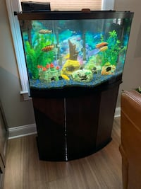 36 Gallon Bowfront Tank, Stand, equipment and Fish (African Cichlids)