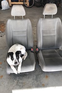 Honda civic seats.  ( puppy not included ) Brewster