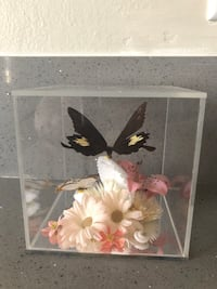 Taxidermy Collection Butterfly Art Anaheim, 92805