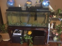 55 gallon aquarium tank Alexandria, 22303
