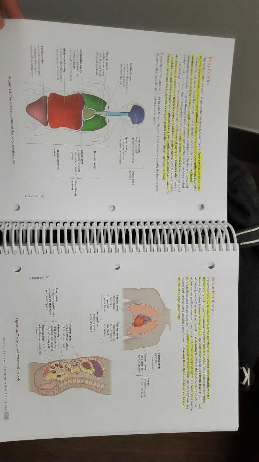 Colorful Anatomy And Physiology Lab Book Answers Photos - Physiology ...