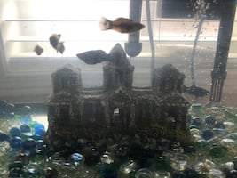 Fish tank comes with 6 FISH!!
